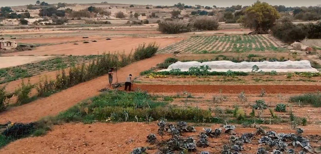 Interviews with young farmers in Malta (c) FoE Malta